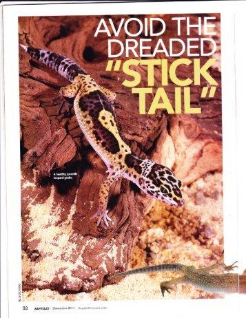 download leopard gecko care sheet pdf petco