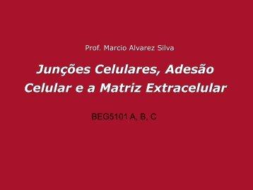 Junções Celulares, Adesão Celular ea Matriz Extracelular