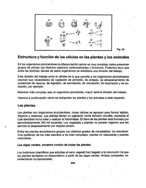 Estructura Y Función De Las Células En Las Plantas Y Los