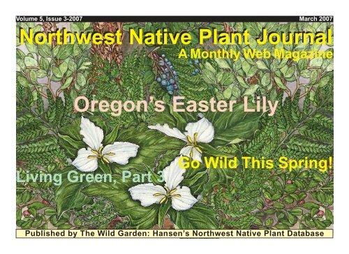 Northwest Native Plant Journal Oregon's Easter Lily