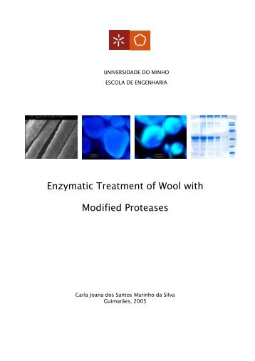 Enzymatic Treatment of Wool with Modified Proteases