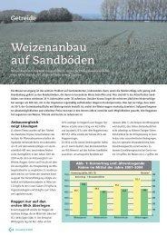 Weizenanbau auf Sandböden Weizenanbau auf Sandböden - DSV