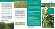 Maisuntersaaten - DSV