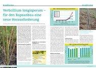 Verticillium longisporum - DSV