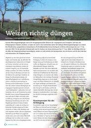 Weizen richtig düngen - DSV