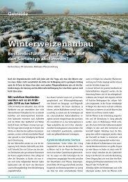 Winterweizenanbau - DSV