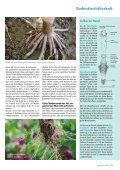 Die Wurzel - DSV - Seite 2