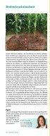 Die Wurzel - DSV - Seite 3