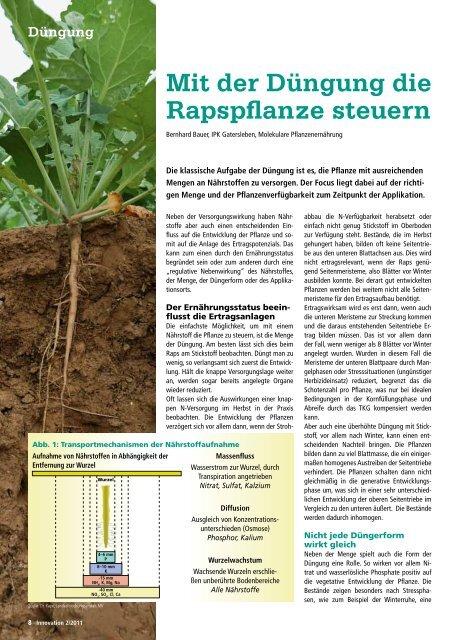 Mit der Düngung die Rapspflanze steuern - DSV