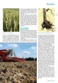 Getreide - DSV - Seite 2