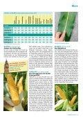 Die neue Generation Mais für Deutschland - DSV - Page 2