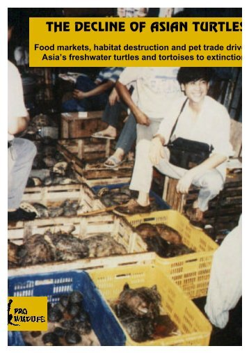 THE DECLINE OF ASIAN TURTLES - Pro Wildlife