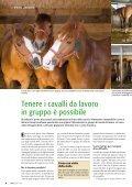 Cavalli da lavoro tenuti in gruppo pagina 4 Razze di ... - Bioattualità - Page 4