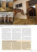 Cavalli da lavoro tenuti in gruppo pagina 4 Razze di ... - Bioattualità - Page 5