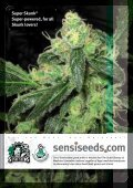THSeeds - Dolce Vita International - Page 2