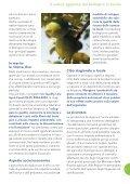 Ristorazione Collettiva Bio - Aiab Veneto - Page 5