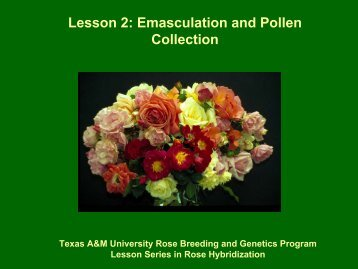 Emasculation and Pollen Collection - Aggie Horticulture - Texas ...