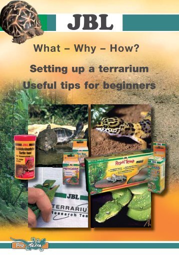 How? Setting up a terrarium Useful tips for ... - Reptiles Greece
