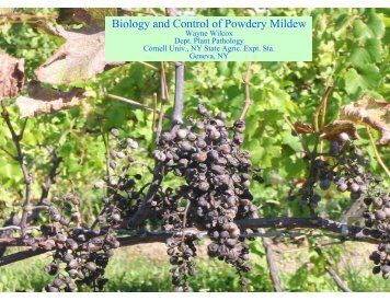Biology and Control of Powdery Mildew