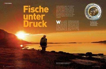 Fische unter Druck - Raubfisch-XXL.de