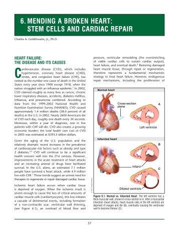 Simple Letter Agreement - Stem Cell Information