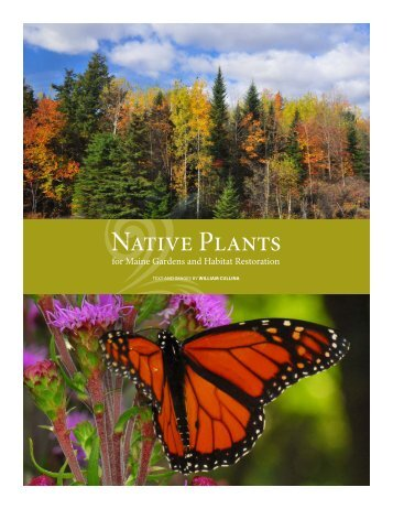 Native Plants - Coastal Maine Botanical Gardens