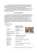 Lope de Vega Fuenteovejuna - SantamariaWeb > Home page - Page 3