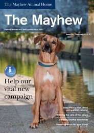Help our vital new campaign - The Mayhew Animal Home
