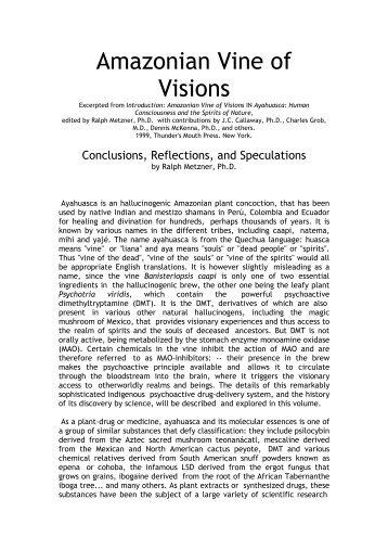 Amazonian Vine of Visions - the DMT-Nexus