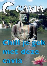 Wat is de meeste chille kroeg in Amsterdam? (Prijsvraag)
