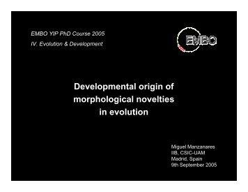 Developmental origin of morphological novelties in evolution - EMBO