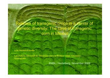 Release of transgenic crops in a center of genetic diversity ... - EMBO