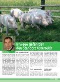 voes 3-2008:VÖS 1/2005 - Schweine.at - Seite 4