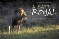 A Battle Royal - Panthera
