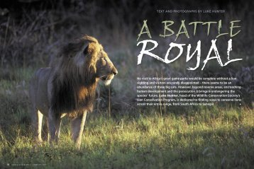 A Battle Royal - Panthera