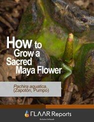 Download - Maya Ethnobotany