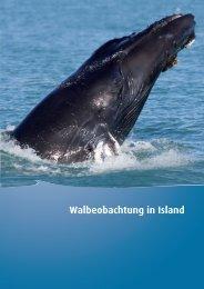 Walbeobachtung in Island - Iceland.de