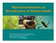 Macroinvertebrates as Bioindicators of Stream Health - WUP Center ...