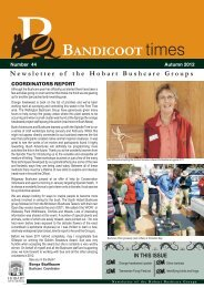 bandicoot - Hobart City Council