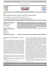 Mitochondrial potassium channels and reactive oxygen species