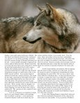 Alpha Male - Living With Wolves - Page 3