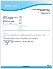 Chromatin Assembly Factor 1 (CAF-1) Monoclonal ... - Eurogentec