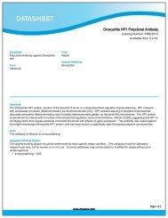 Drosophila HP1 Polyclonal Antibody (PRB-291C) - Eurogentec