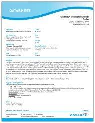FOX3/NeuN Monoclonal Antibody, Purified - Eurogentec