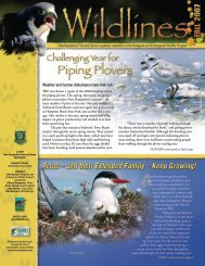 Piping Plovers - New Hampshire Fish and Game Department