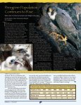 Piping Plovers - New Hampshire Fish and Game Department - Page 4