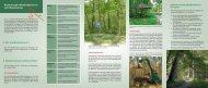 Flyer: Kartierung der Waldfunktionen im Land ... - Brandenburg.de