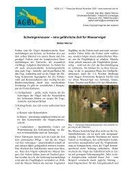 Schwingenmauser – eine gefährliche Zeit für Wasservögel
