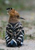 Artenliste Vögel (Stand 2012/7) - Nationalpark Neusiedler See ... - Seite 7
