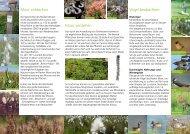 Vögel beobachten Moor entdecken Moor verstehen - Biologische ...
